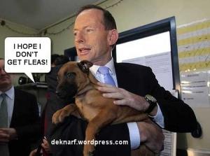 Abbott Dog Fleas