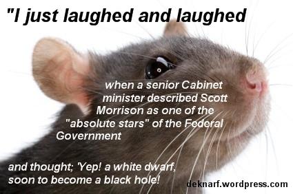 Morrison star Rat