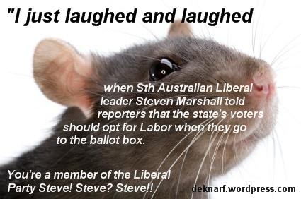 SA Liberal Rat