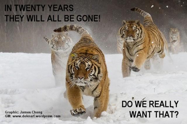 Tiger All Gone