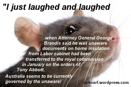 Unaware Brandis Rat