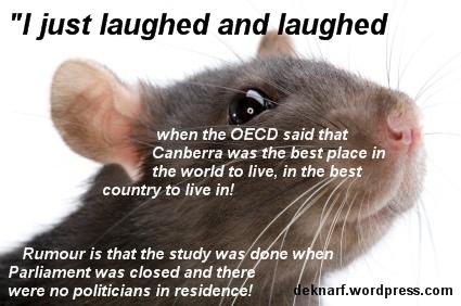 Canberra Rat