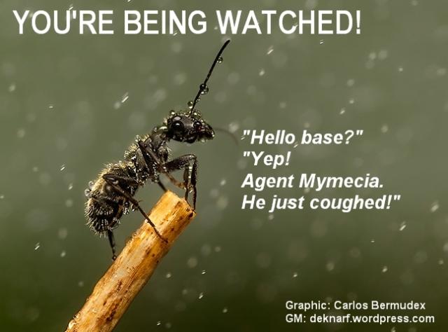 Watcher Ant