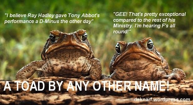 D Minus Toads