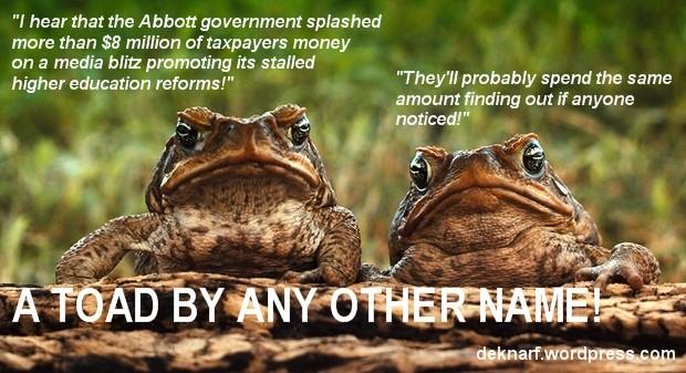 Media Blitz Toads