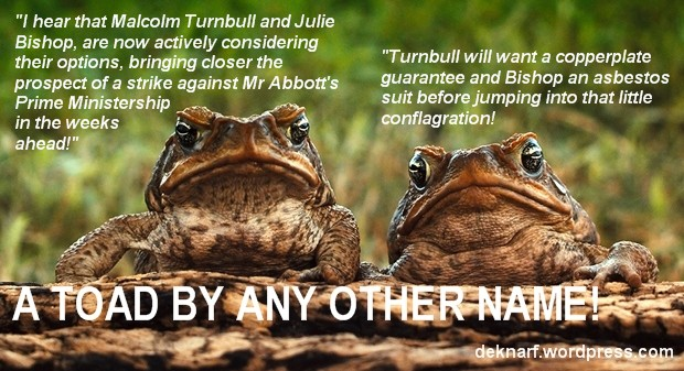 Abbott Ruction Toads