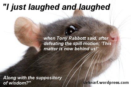 Behind Rabbott Rat