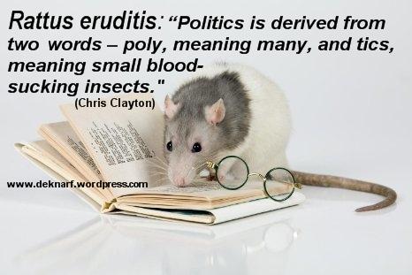 Erudite Politics Rat