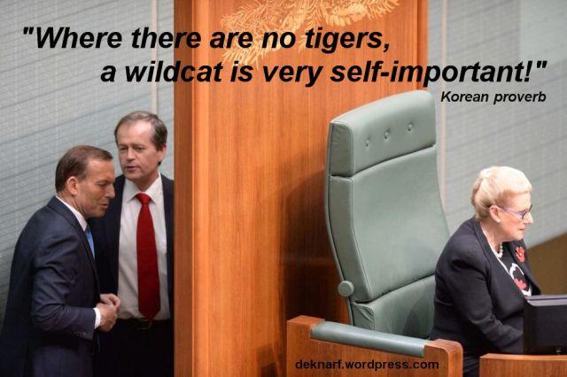Wildcat sans Tigers