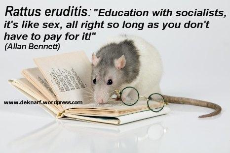 Erudite Education Rat