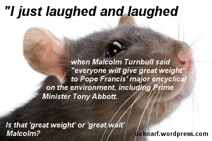 Great Weight Rat