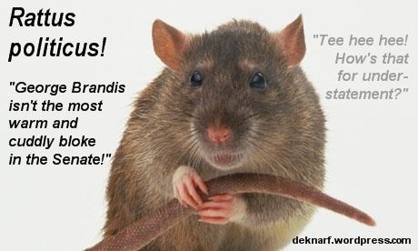 Political Brandis Rat