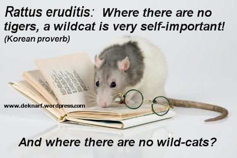 Eruditis Wildcat Rat