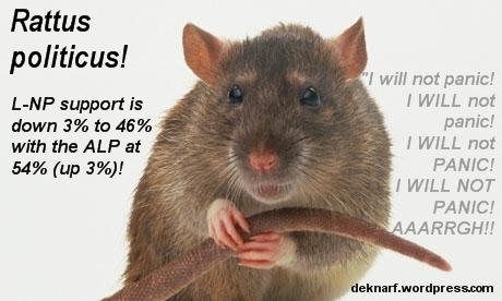 Panicky Rattus Politicus
