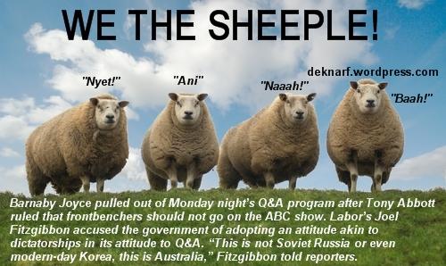 Qanda Sheeple