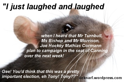 Canning Election Rat