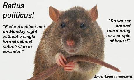 Murmuring Politicus Rat