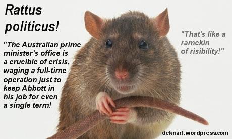 Politicus Rat Risibility