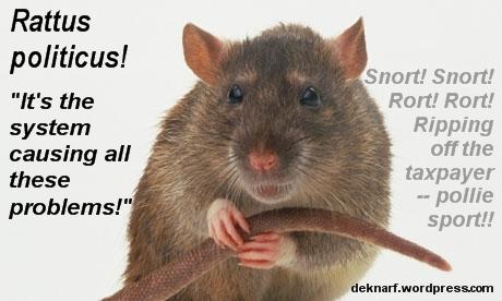 Politicus Rat Rort