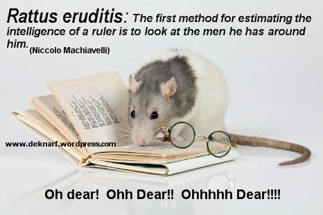 Machiavelli Erudite Rat