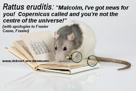 Copernicus Eruditis Rat