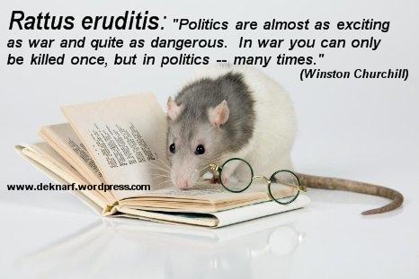 Politics Eruiditis Rat