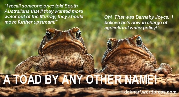 Water Policy Toads