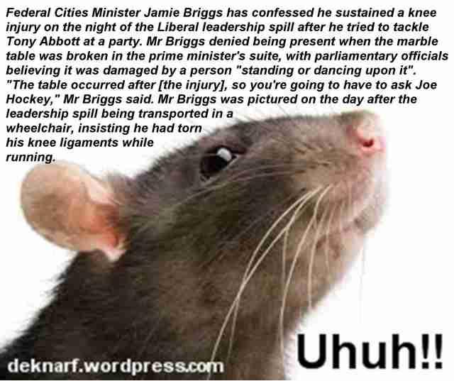 Briggs Liar Uhuh Rat