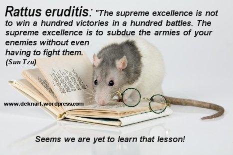 Eruditis War Rat