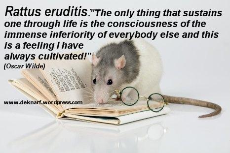 Inferior Eruditis Rat