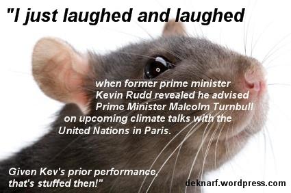Rudd Advice Rat