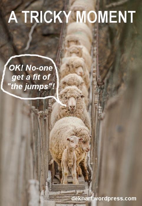Jumping Sheep Aug