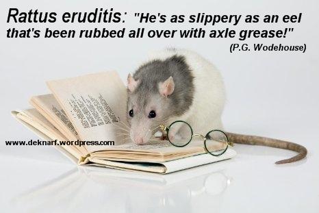 Slippery Eel Eruditis