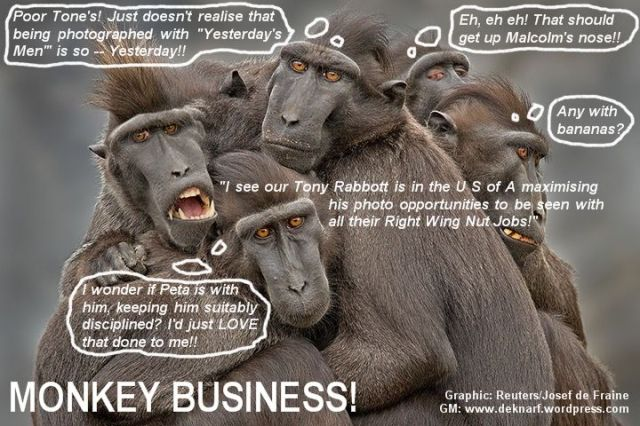 Rabbott Ego Monkey Business