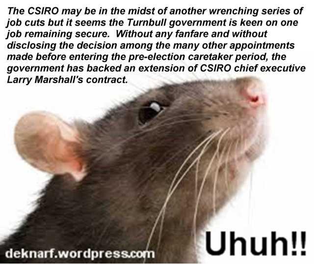 Uhuh CSIRO Rat